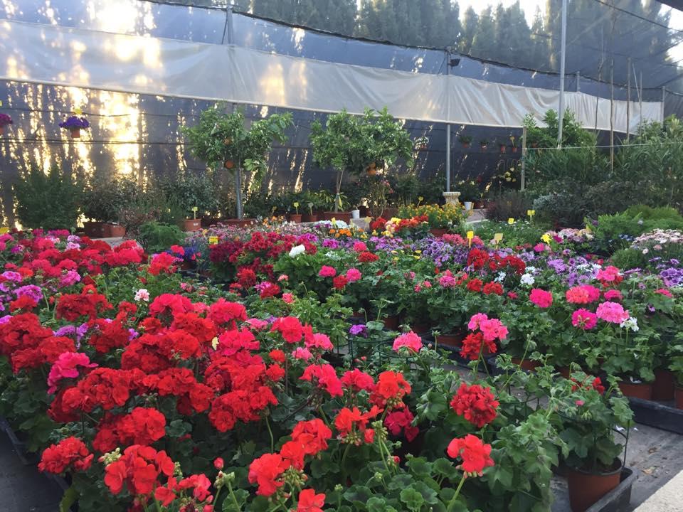 Jardineria Azahar Logo